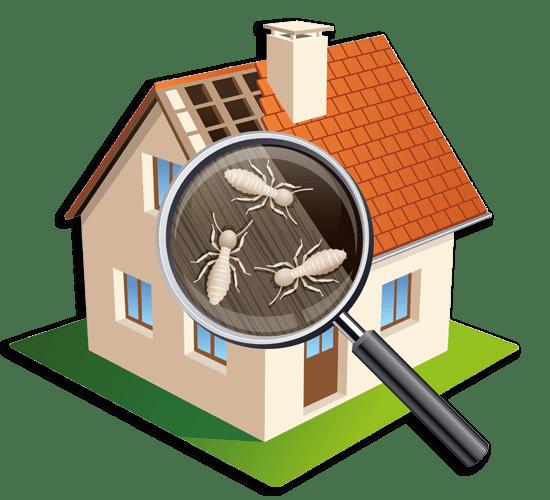 Présence d'insectes xylophages dans une maison