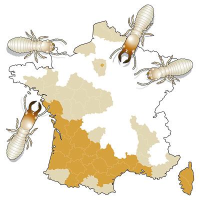 Présence des termites en France